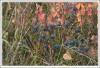 <p>Черника в долине Лаутербрунненталь</p>